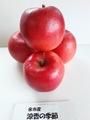 余市産りんご「涼香の季節」5kg詰 14~18玉