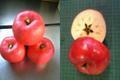 余市産りんご「ひめかみ」 5kg 14-23玉