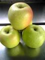 余市産りんご「王林」 5kg詰 14~18玉