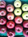 12月限定!りんごの「グルメセット」4種類詰 5kg 16玉