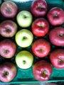 12月限定!りんごの「グルメセット」4種類詰 5kg 14玉