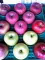 12月限定!りんごの「グルメセット」4種類詰 5kg 13玉