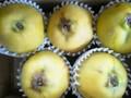 香りの果実 余市産「マルメロ」 4~6玉