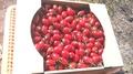 各品種トマト3kgお買い得品! 7月下旬~9月末頃まで発送