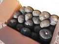 坊ちゃん南瓜 10kg(数量限定) 20~30玉程度 10月中旬~発送