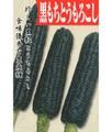黒もちきび(黒いとうもろこし) 本数売り 9月中~下旬頃予定