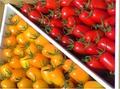トマト2種詰め合わせ1 各1kg詰め 7月下旬~9月末頃まで発送