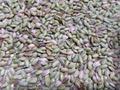 完全無農薬『京都旭1号の青米』850g【送料込み】文鳥・インコ・オウム・十姉妹などの小鳥の大好物!