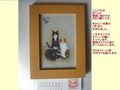 壁紙の3匹の猫①