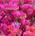 4th album「PASSION IS ALL」(送料税込)