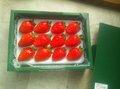 かおり野化粧箱