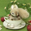 白茶ぽちゃりす1709