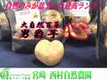 男爵芋「心」10kg