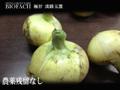 農薬残留ナシ!淡路タマネギ5kg