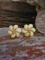 モンゴシェル Flower* ピンピアス  No,2