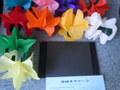 五段スクリーン バネ花が5回にわたって出現 解説DVD付き