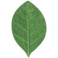 天然敷葉G3 緑 柿型