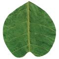 天然敷葉G6 緑 桂型