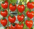 【お得2P】飯野さんのトマトベリー150g<減農>