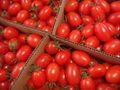 特栽アイコミニ塩トマト大袋500g