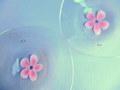 Glass Studio BiBi*ガラスの花びら皿