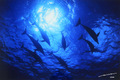 Heavenly Dolphins #003