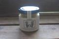 タスマニア島固有種 生ハチミツ ワイルドフラワー蜂蜜 130g