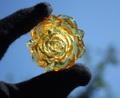 セール特価! 超美麗! 本琥珀 手彫りバラ(ヒマラヤ水晶さざれセット付)