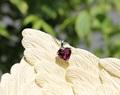 気品ある赤ワイン色! 宝石質ロードライトガーネット ハート型ペンダント