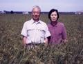秋田県産・井手さんの『有機栽培あきたこまち』白米 約10kg(5kg×2袋入)