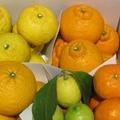 【熊本・鹿児島】贈答用★春の柑橘 4種詰合せ 約5kg