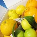 【熊本・鹿児島】贈答用★春の柑橘4種詰め合わせ3kg