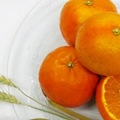 ◎贈答用◎鶴田有機農園の初夏の柑橘4種詰め合わせ5kg