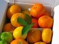 【熊本・鹿児島県産】鶴田有機農園 冬の柑橘詰合せ 約3kg(4種・各2~6玉)