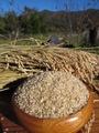 【玄米】5kg/こしひかり<新米>