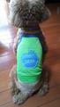 グリーンメッシュランニングリンゴ お名前刺繍