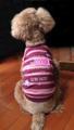 ピンクフエルトネームTシャツ お名前刺繍