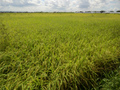 〈予約販売〉10%増量!! みのる米 玄米5キロ