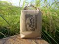 〈新米予約〉10%増量!! 無肥料無農薬 自然栽培コシヒカリ このおこめどうじょ 玄米10キロ