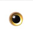 10.5mm ゴールド  クリスタルアイ