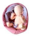 7カ月胎児モデル
