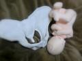 骨盤+胎児人形 助産実習セットS