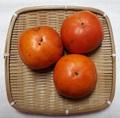 自然栽培 能登紅富有柿