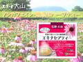 大山町産エキナセアティー(箱入)