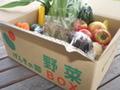 旬の野菜ボックス(大)(ご自宅用:クール便込)
