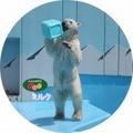 釧路市動物園オリジナル缶バッチ ホッキョクグマ ミルク