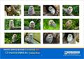 2021年度版A4サイズ壁掛けカレンダー「フクロウの子供たち」Selection