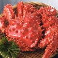 ★保証付★花咲蟹 2尾で1kg前後・ショックフリーザー冷凍品