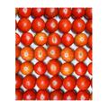 ご家庭用フルーツトマト約4kg