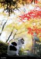 [オリジナル写真]森の猫 姉さんの四季 「姉さん、紅葉を愛でる」